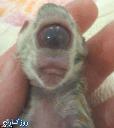 تولد گربه یک چشم و بدون بینی!
